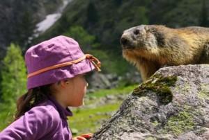GB-2940-marmotte-et-jeune-enfant-dans-lOisans