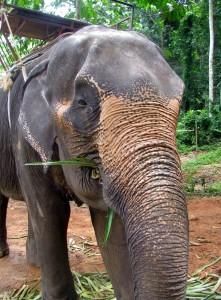 camp d'éléphant