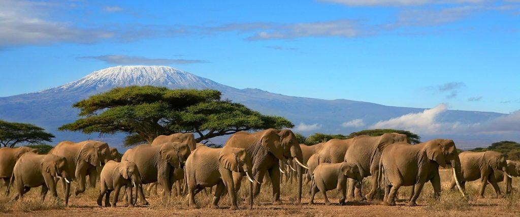 Tanzanie éléphants